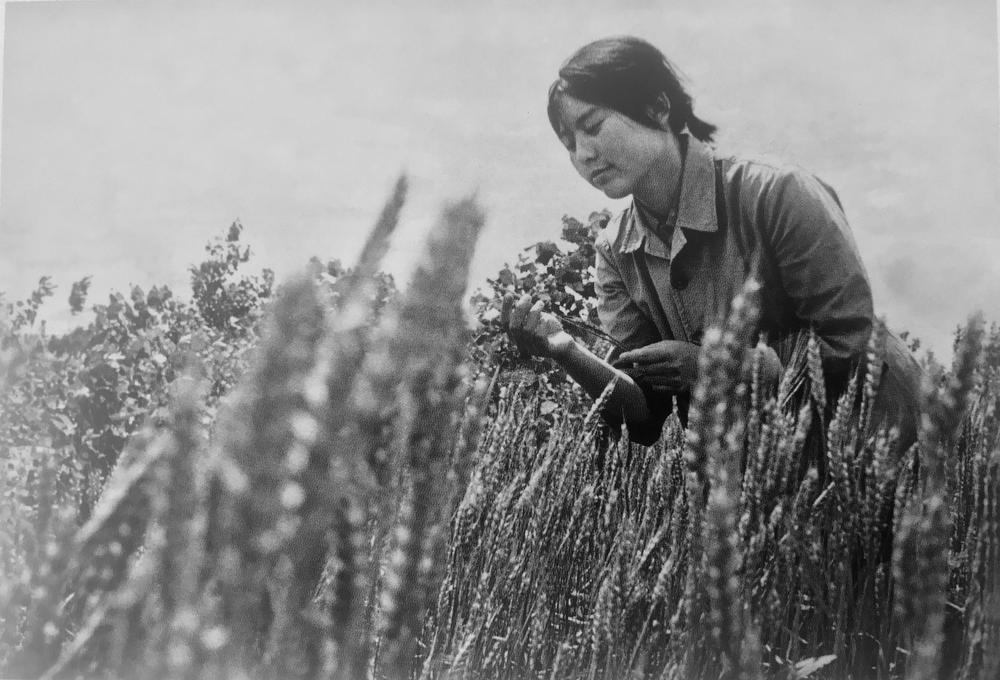 a photo of the artist as a young woman in a field