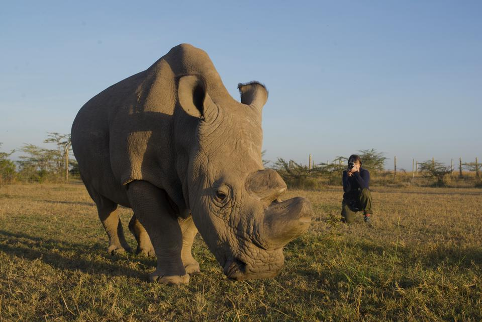 Diana Thater with Sudan the Rhino, Ol Pejeta Conservancy, Kenya, 2016.